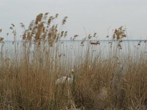 Gardasee Lago di Garda Schwan