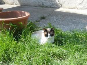 Italien Gardasee Katze Natur